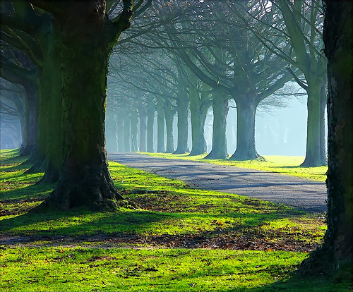 The Avenue in mists and sun