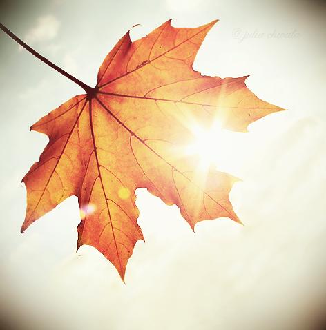 colours_of_autumn__by_julkusiowa