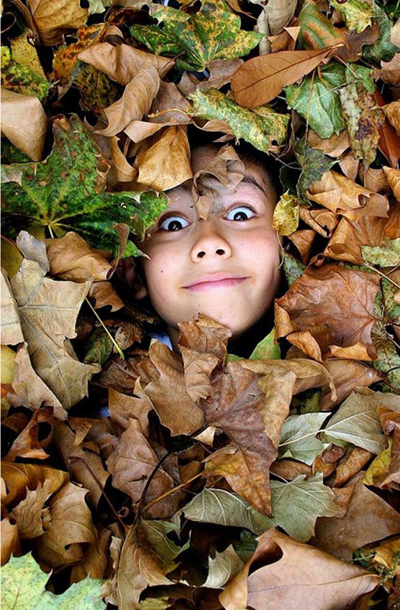 gif automne