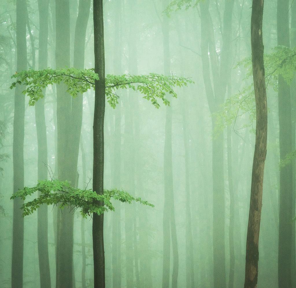 secret-wood